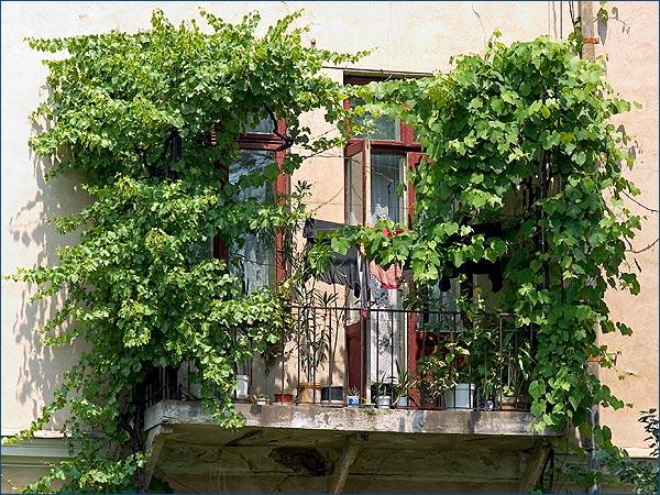 vita de balcon