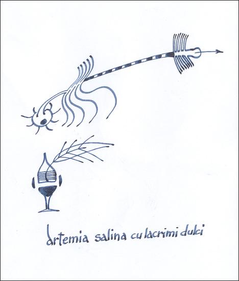artemia salina cu lacrimi dulci
