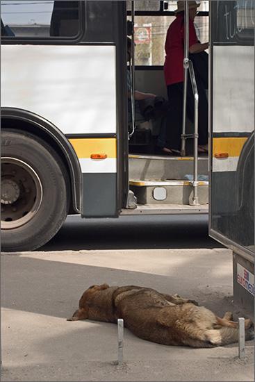 nici autobuzele nu poarta chiloti