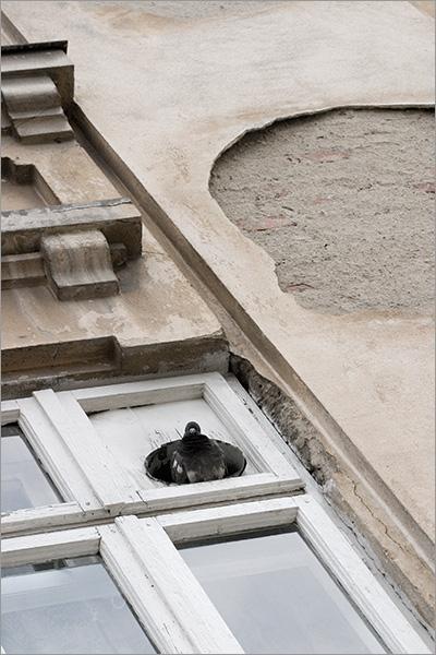 pigeon-brick