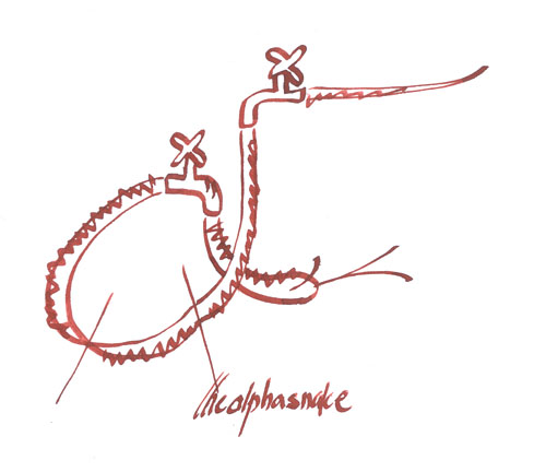 the alpha snake