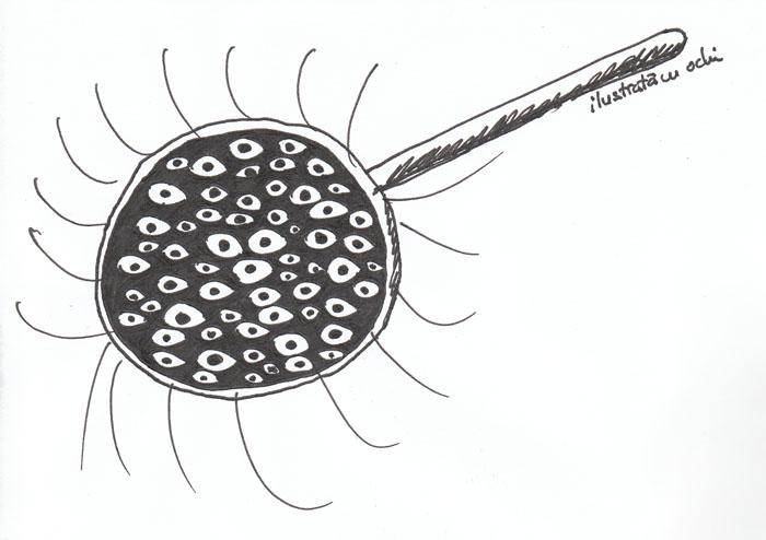 ilustrata cu ochi