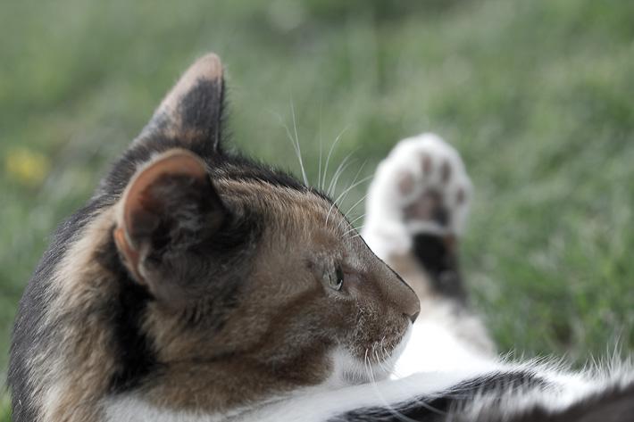 luna, hello kitty